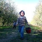 Bucket List in Our Backyard: Apple Picking in Sebastopol