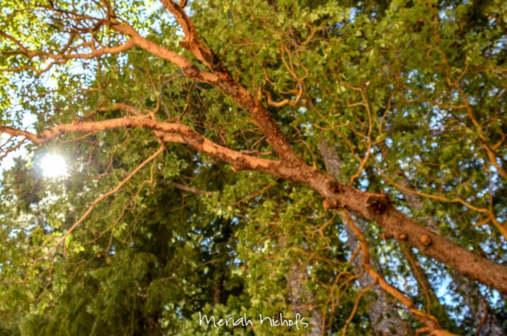 meriah nichols aug (4 of 31)