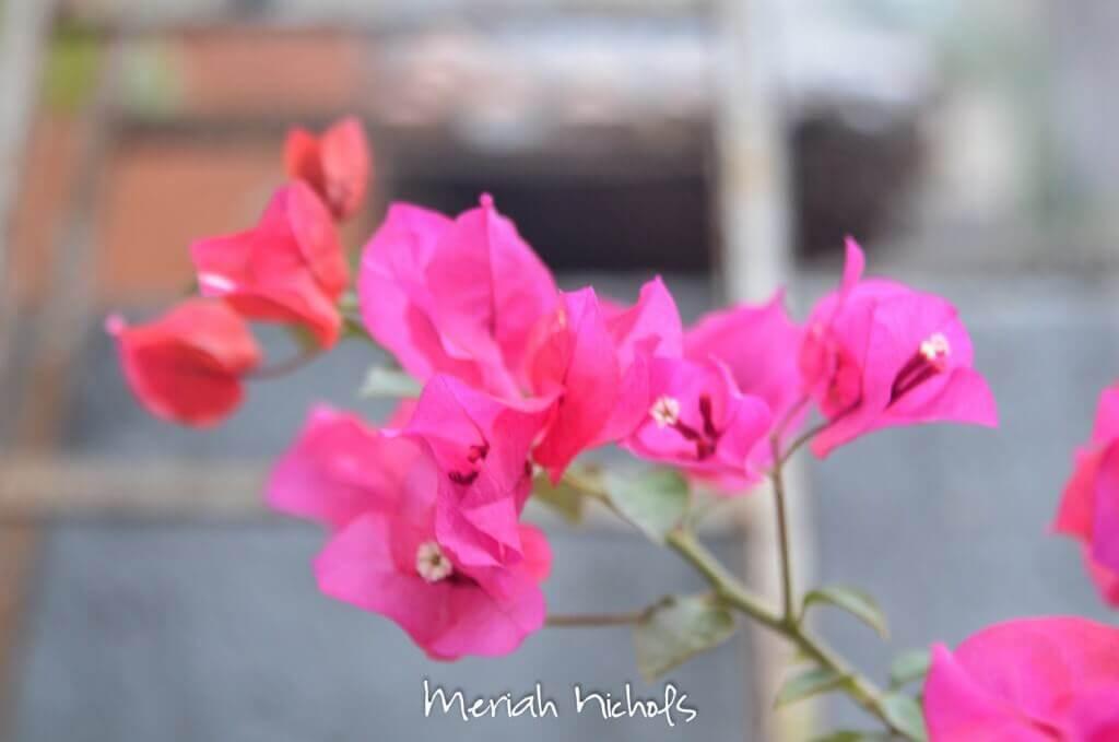 meriah nichols mexico-51