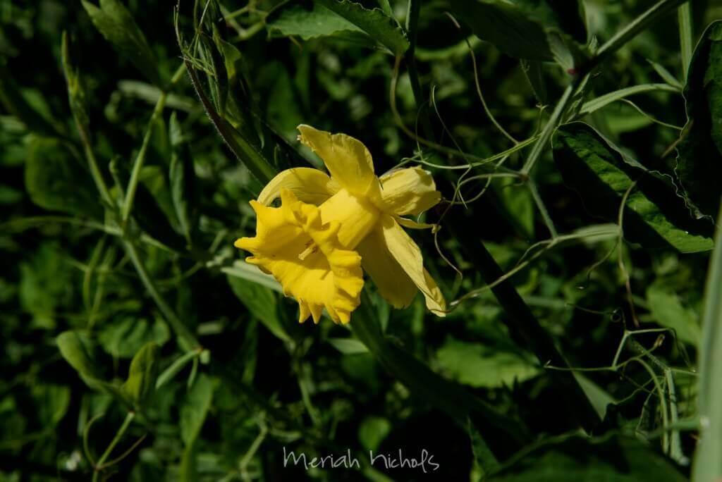 Meriah Nichols Lost Coast April 2015-0150-3