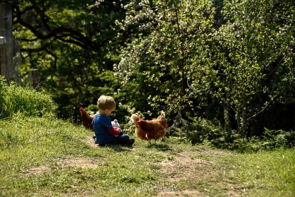 little boy surrounded by chickens