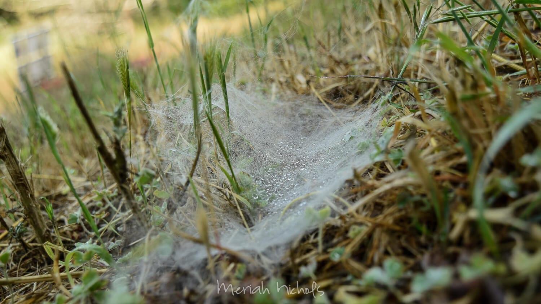 spider web on the ground