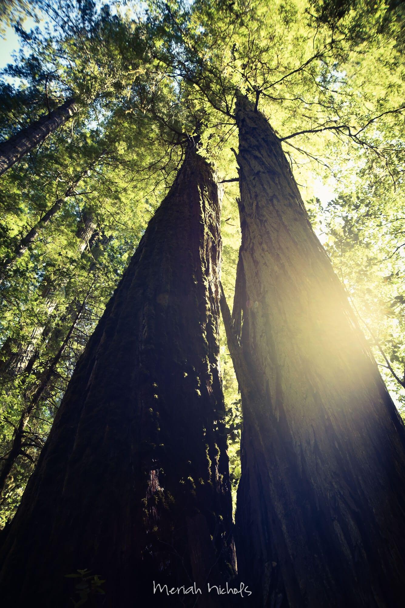 Meriah Nichols Redwoods-51