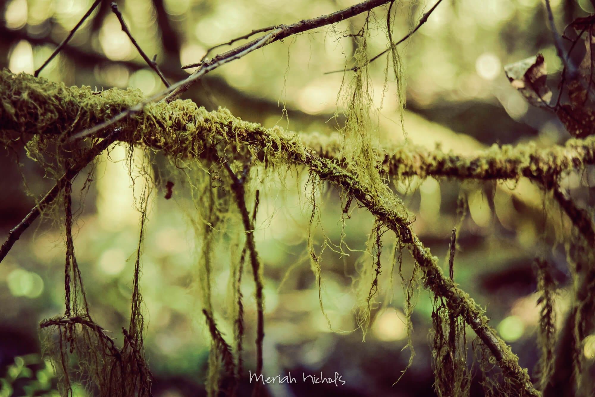 Meriah Nichols Redwoods-55