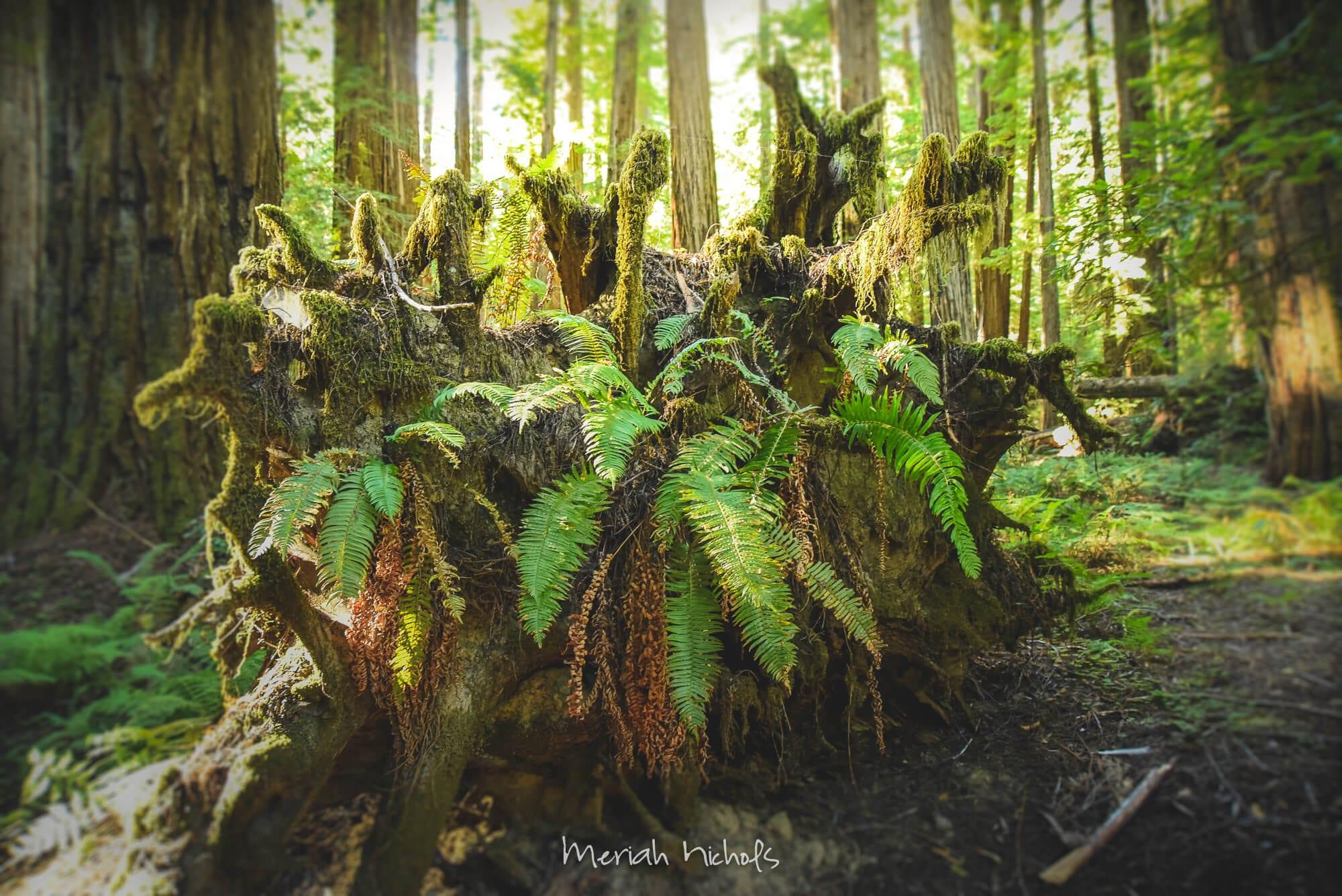 Meriah Nichols Redwoods-8