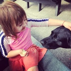 child with down syndrome pets a service dog