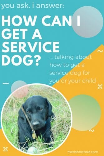 how can I get a service dog