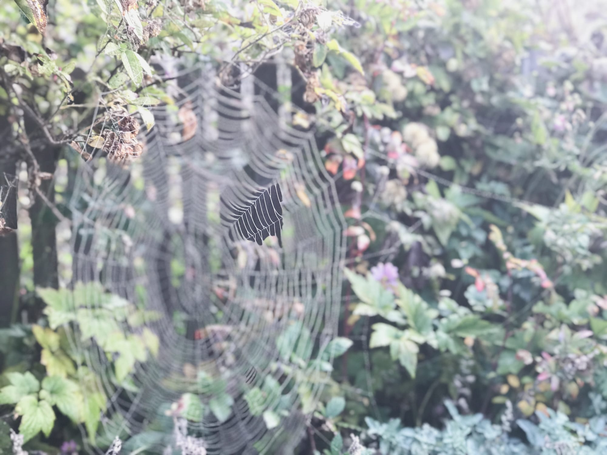 Seeing Spider Webs