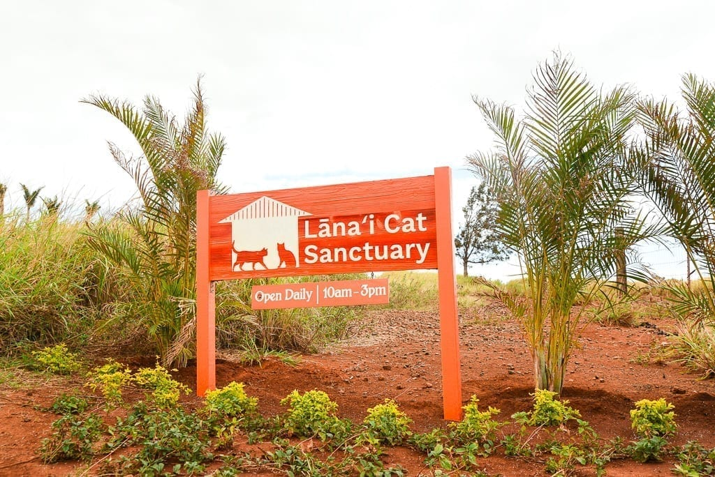"image description: read sign reads ""Lanai Cat Sanctuary"" and the dirt it is standing in is also red"