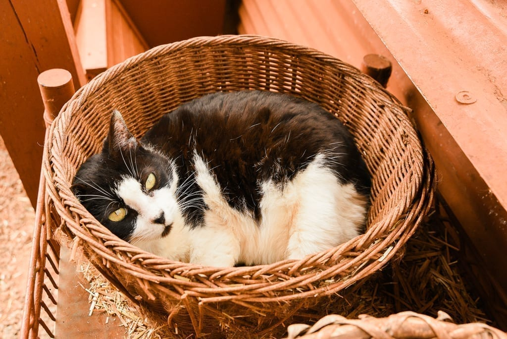 image description: a cat cuddles in a basket