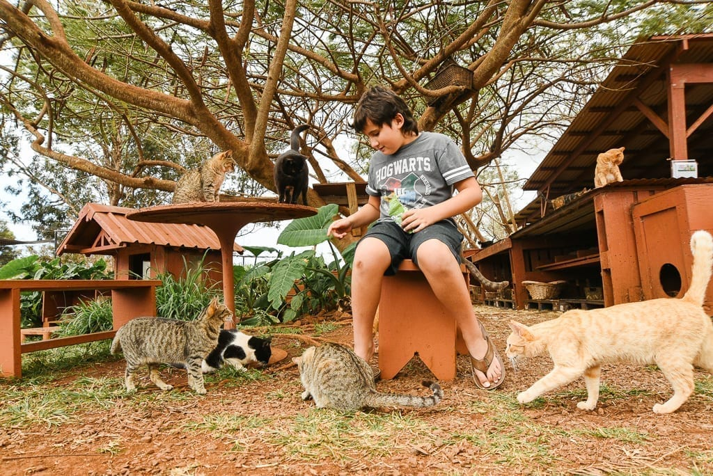image description: child sits on a bench with cats all around him