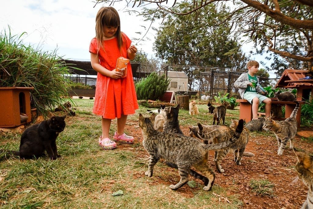 image description: girl in a red dress smiles as she feeds cats; many cats are crowded around her, hoping to get some of the treats