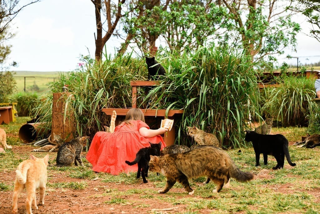image: girl in red dress bends down with cats surrounding her. she is feeding them