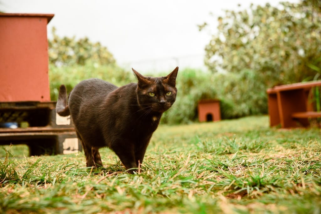 image description: a black cat walks in front of the camera and is looking at it