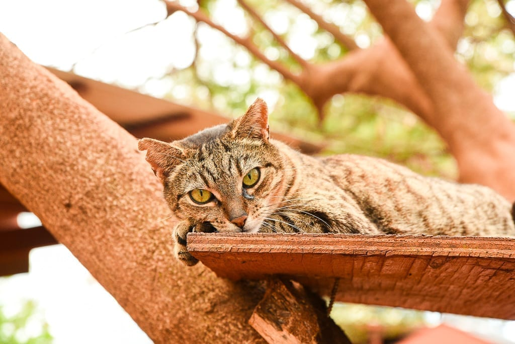 image description: a cat lies on a plank of wood in a tree