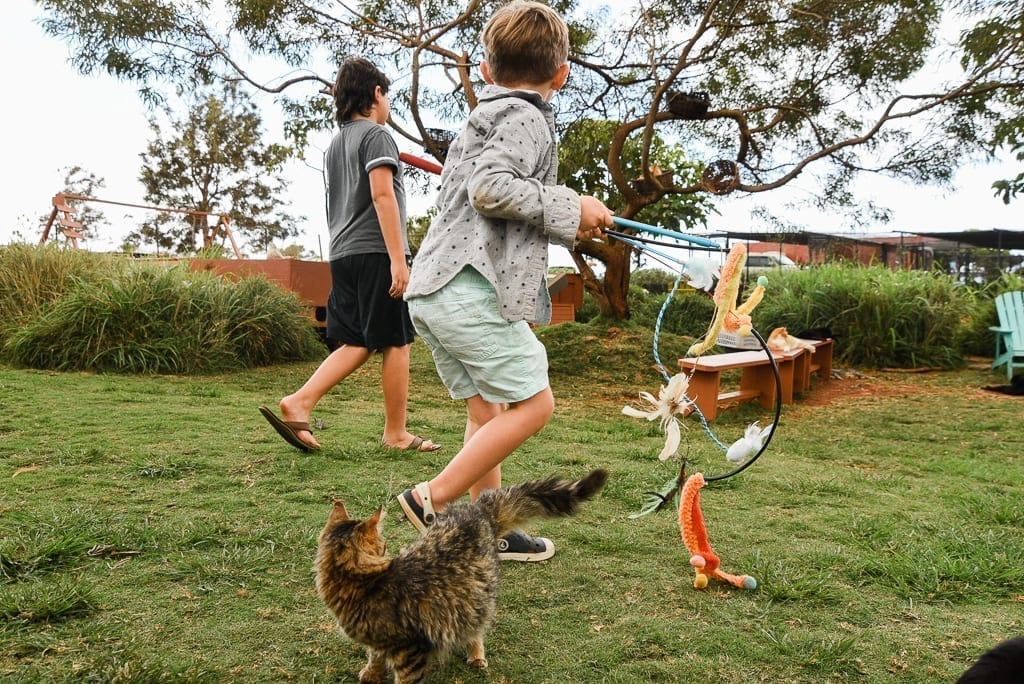 image description: children run with cat toys and cats all around