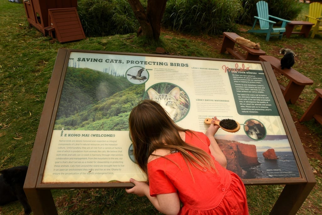 image description: a girl in red dress reads an information display about the cat sanctuary. text from the display is not readable in the photo as it is too small