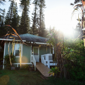 image description: a plantatation house in the morning light with pine trees behind it