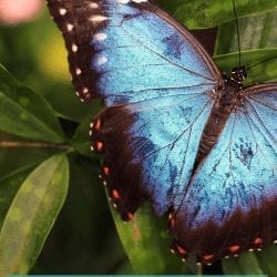 "a blue butterfly: image of a blue butterfly on green leaf. text reads, ""a blue butterfly to ride: on grief and birthdays"""