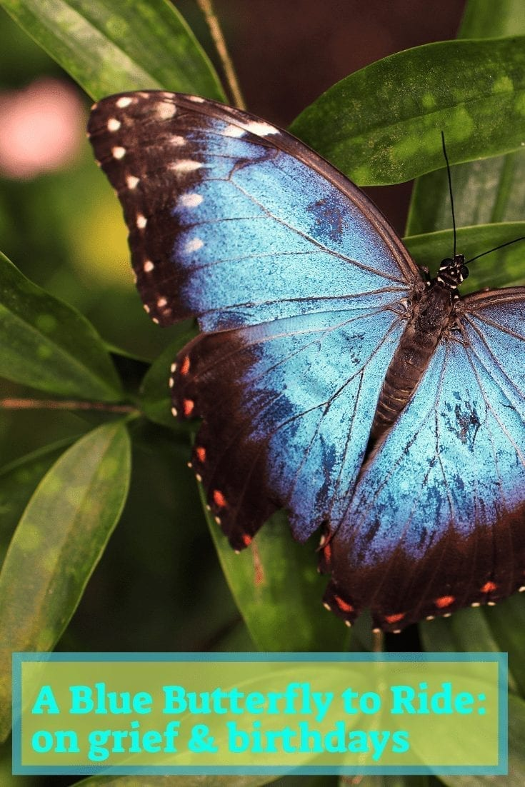 """a blue butterfly: image of a blue butterfly on green leaf. text reads, """"a blue butterfly to ride: on grief and birthdays"""""""