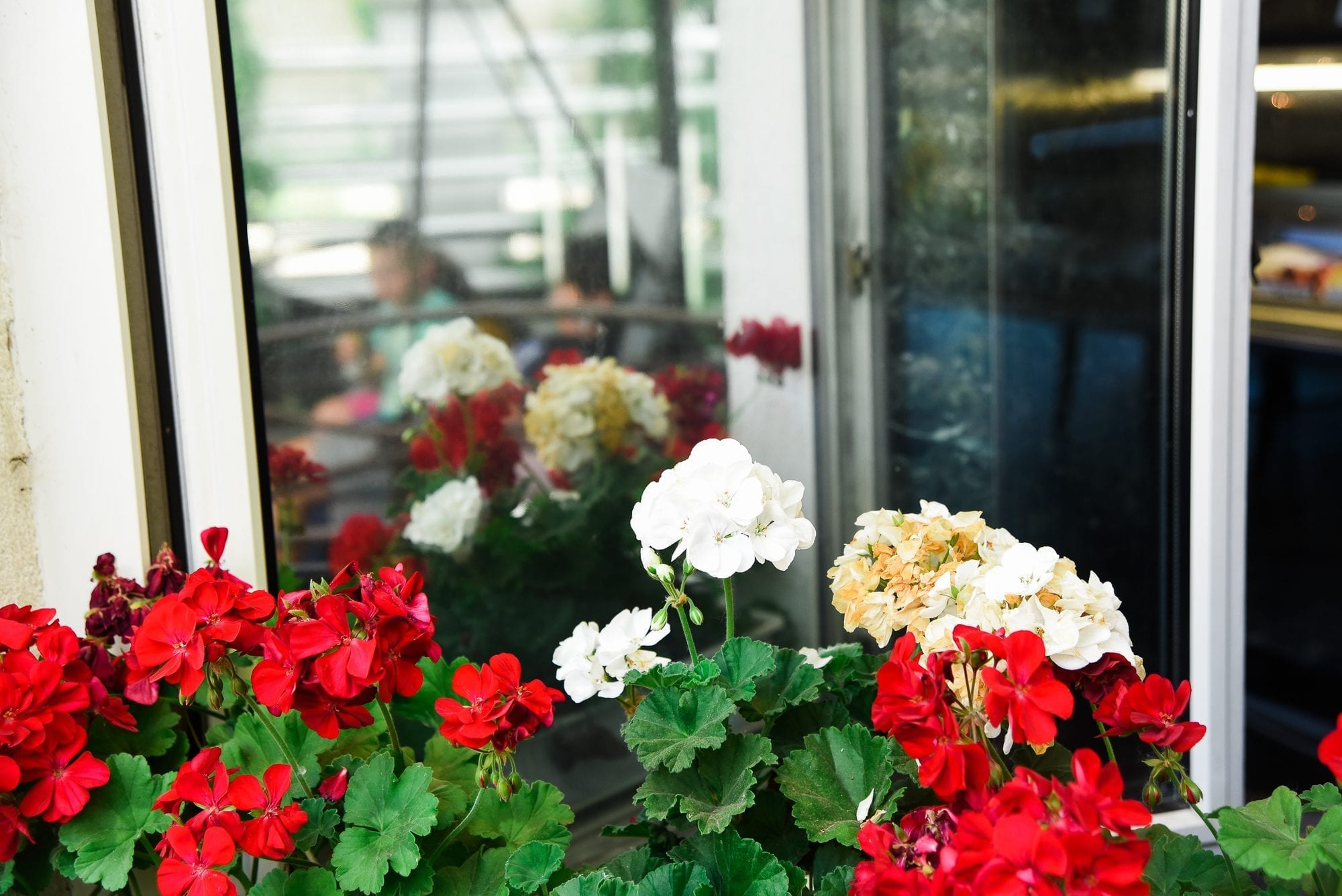 geraniums in window sill in budapest