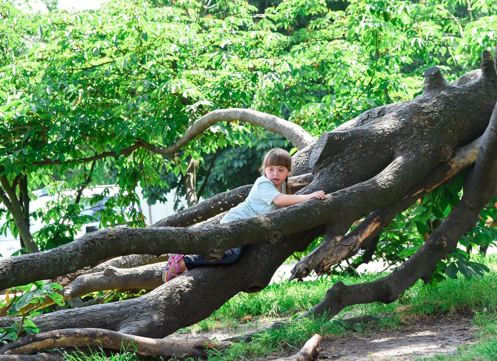 moxie on a tree
