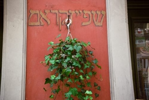 plant hanging with hebrew lettering behind it