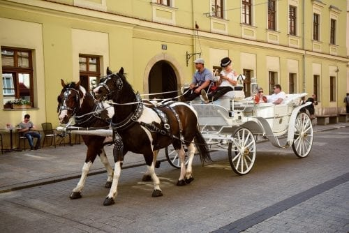 horse and carriage in old krakow