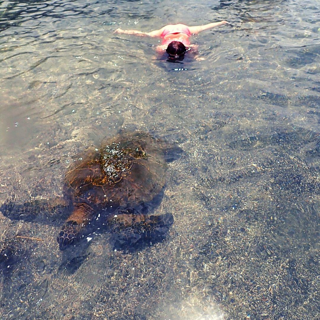 girl swimming towards sea turtle