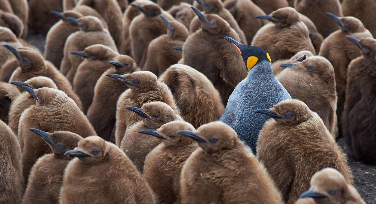 Disability pride and acceptance of disability: penguins all of the same color and a blue penguin in the middle