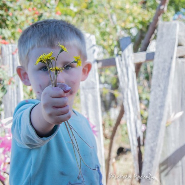 boy holding daisies in hand