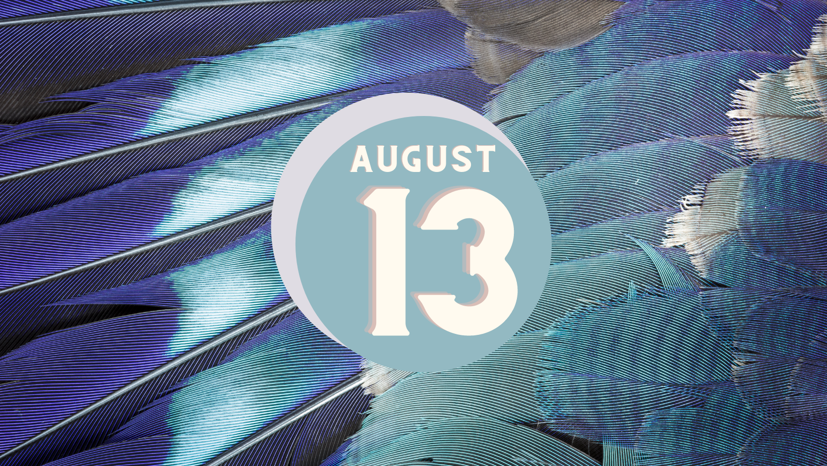 blue and grey feather background, circles and text on circle reads August 13
