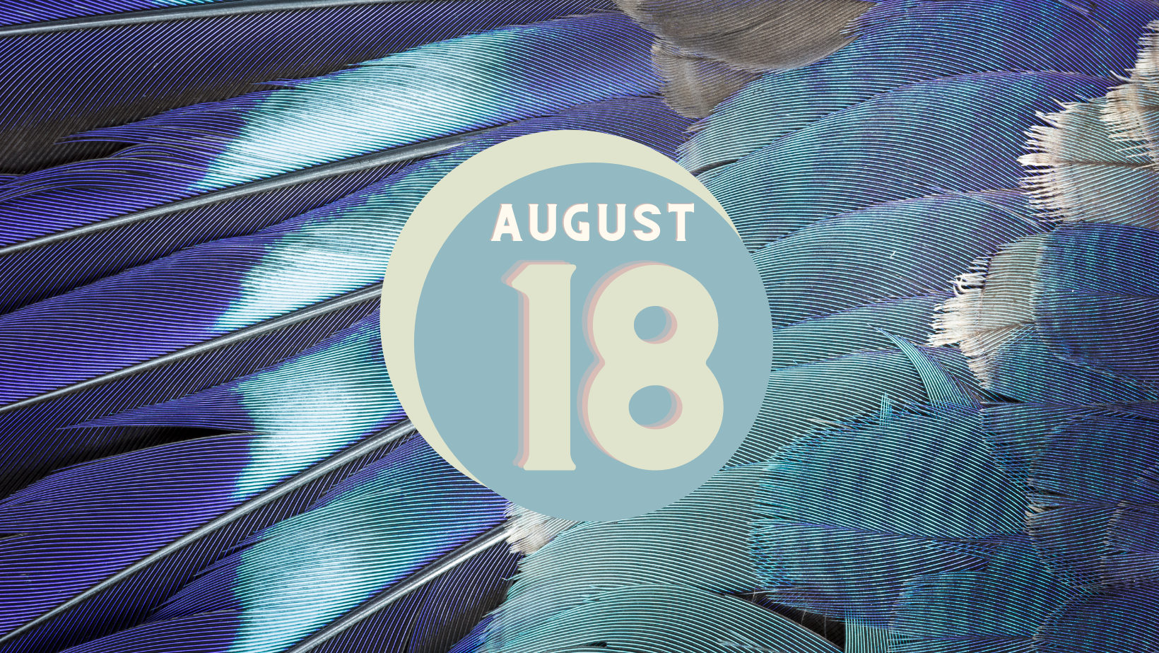 blue and grey feathers background, text reads August 18