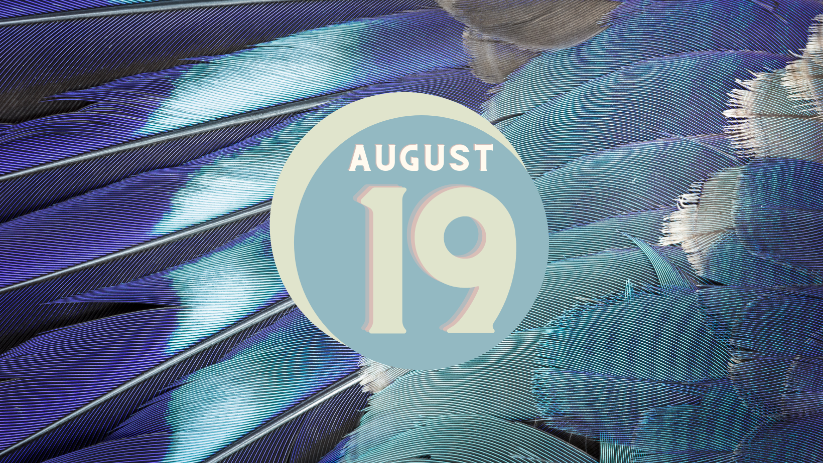 blue and grey feathers background, text reads August 19