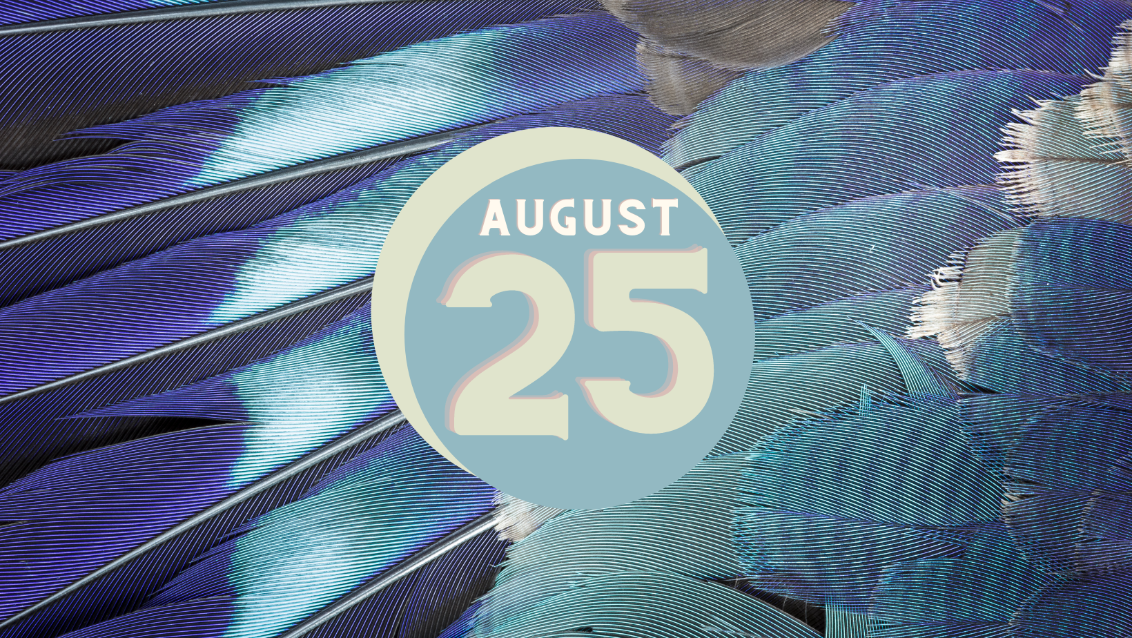 blue and grey feather background, text reads August 25